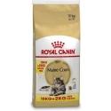 Royal Canin Maine Coon Adult Bonusbag 10+2 kg GRATIS