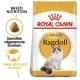 Royal Canin Ragdoll Adult 10 kg