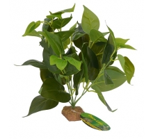 Lucky Reptile Golden Pothos