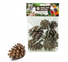 Back Zoo Nature Forest Pine Cones for Birds
