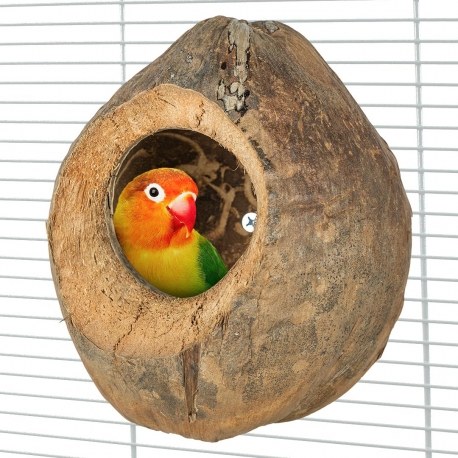 Back Zoo Nature Villa Coconut