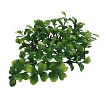 Lucky Reptile Turtle Plant - Bacopa