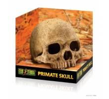 Exo Terra Primate Skull Primaat
