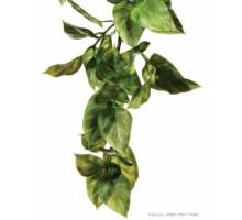 Exo Terra Hanging Rainforest Plant Amapallo Small
