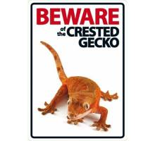 Beware of the CREASTED GECKO