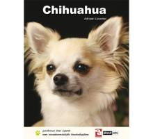 Chihuahua - Adriaan Louwrier