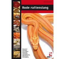 Rode rattenslang