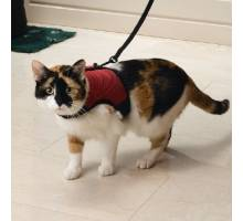 Loopharnas Comfort voor katten Met looplijn en belletje Rood