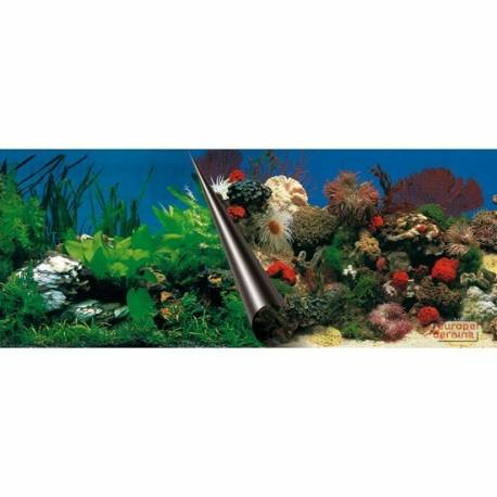 Foto-achterwand - 120cm-coupe STONEenCORAL - 50cm