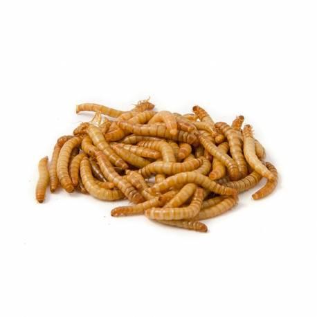 Meelwormen 100 tot 1000 gram voedseldieren
