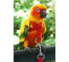 Vogeltuigje petit