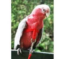 Vogeltuigje small