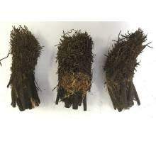 Boomvarenstam half 50cm halve stam
