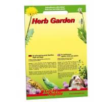 Lucky Reptile Herb Garden - Ribwort
