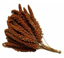 Millet Roux Trosgierst Rood 250 gram