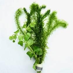 Bosje Gemengde Waterplanten