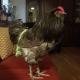 FlockSuit / Kippen Luier X-Small Green Flockadelic