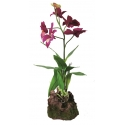 Lucky Reptile Orchid Purple
