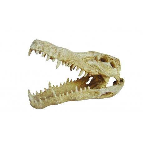 Lucky Reptile Deco Skull Crocodile