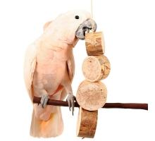 Bird Kabob Mucho Grande