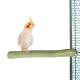 Vogel Zitstokken - Back Zoo Nature Java Single Perch Medium