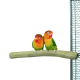 Zitstokken Vogel -Back Zoo Nature Java Single Perch Small