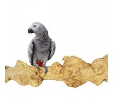 Zitstokken Vogel -: ZooFaria Java Perch GIANT