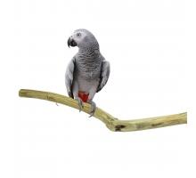 Zitstokken Vogel -ZooFaria Teak Perch Long ca. 100 x 3/5 cm
