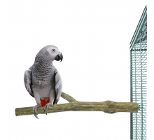 Zitstokken Vogel -ZooFaria Duo perch teak large