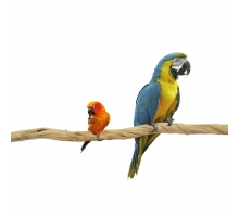 Back Zoo Nature Liaan Sumbawa Large Vogel