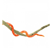 Back Zoo Nature Liaan Thai Taowan Reptiel - Medium ca. 100 x 4-6 cm