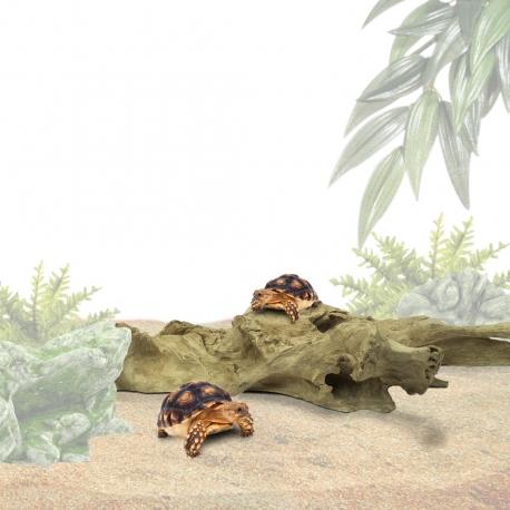 Teak Background M Reptiel