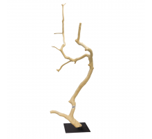 Back Zoo Nature Hardwood Fruit Tree A23