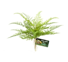 Zoo Med Lace Fern