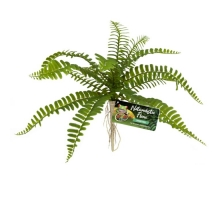 Zoo Med Sword Fern