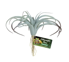 Zoo Med Tillandsia Air Plant