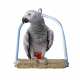 Vogel Zitstokken -Tobi Nagelslijt Schommel Medium