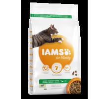 Iams Cat Lamb 10 kg