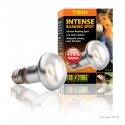 Exo Terra Intense Basking Spot Lamp 75 watt