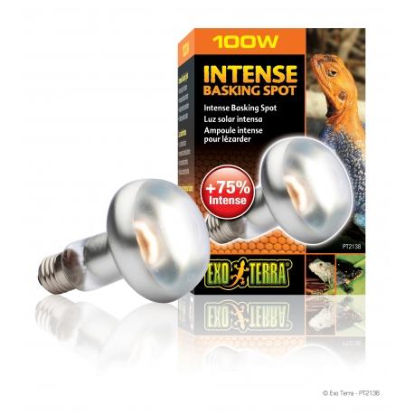Exo Terra Intense Basking Spot Lamp 100 wat