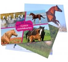 Mijn 40 Mooiste Paarden - Ansichtkaarten